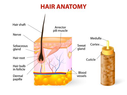 Randy Jacobs M D Damaged Hair Follicles